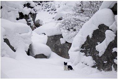Bild 3 Gebirgslandschaft mit Hund, Wimbachgries/Berchtesgadener Land [Foto: Heiko Berner]