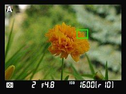Nikon D90 Messfeld-Platzierung [Foto: Yvan Boeres]