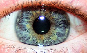 Auge [Foto: MediaNord]