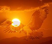 Bild 7: Sonnenuntergangsadler [Foto:Martin Pohl]