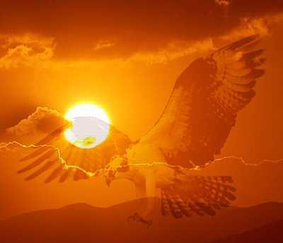 Sonnenuntergangsadler [Foto: Martin Pohl]