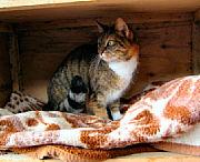 Bild 2: Bild der Katze [Foto:Martin Pohl]