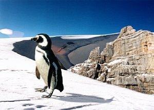 Bild 6: Pinguin  [Foto: Franko Hoffmann-Samaga]