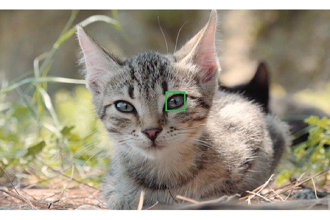 Bild Katzen dürfen neben Hunden und Wildtieren natürlich nicht fehlen. Auch ihre Augen erkennt der Tier-Augen-AF der Sony Alpha 6400 problemlos. [Foto: Sony]