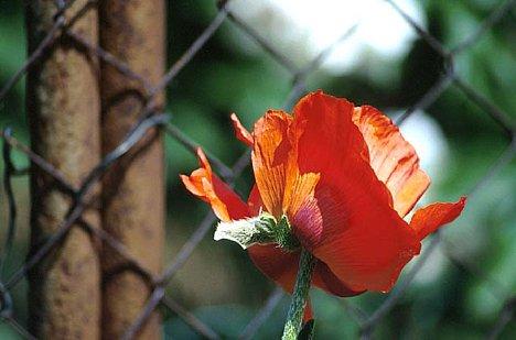Bild Zarte Blume - Inhaltskontrast [Foto: Jürgen Rauteberg]