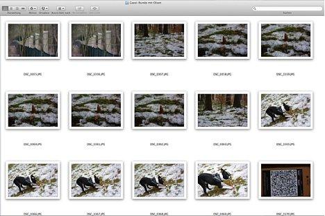 Bild Nach der Fotosafari werden nun alle Aufnahmen inklusive des aufgenommenen QR-Codes in einen Ordner kopiert. [Foto: Ralf Spoerer]
