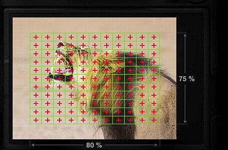 Bild Olympus integriert bei der OM-D E-M1 Mark II erstmals Kreuz-Phasen-AF-Sensoren direkt auf dem Bildsensor. Es sind stolze 121 Stück, die einen großen Teil der Fläche abdecken. Damit sollen bis zu 18 Serienbilder pro Sekunde mit AF-C möglich sein. [Foto: Olympus]