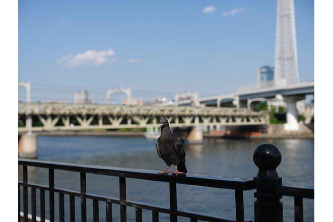 Bild Beispielbild, aufgenommen mit der Fujifilm GXR100, Original (von unserem Bilderserver skaliert). [Foto: MediaNord]