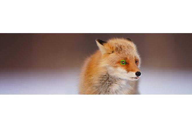 Bild Auch auf die Augen eines Fuchses kann der Tier-Augen-AF der Sony Alpha 6400 nach dem Firmwareupdate 2.00 fokussieren. [Foto: Sony]