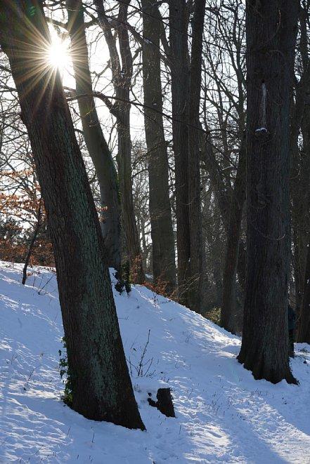 Bild Durch die elf Blendenlamellen entsteht bei geschlossener Blende ein komplexer Sonnenstern. Außerdem ist bei Gegenlicht nur eine geringe Kontrastreduktion zu beobachten. Blendenflecke treten bei etwas flacherem Lichteinfallswinkel auf. [Foto: MediaNord]