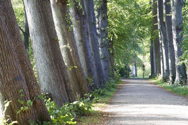 Bild Nimmt die Brennweite zu beziehungsweise der Bildwinkel ab, rücken die Bäume der Allee stärker zusammen. Brennweite etwa 100 mm (KB-Sensor). [Foto: Medianord]