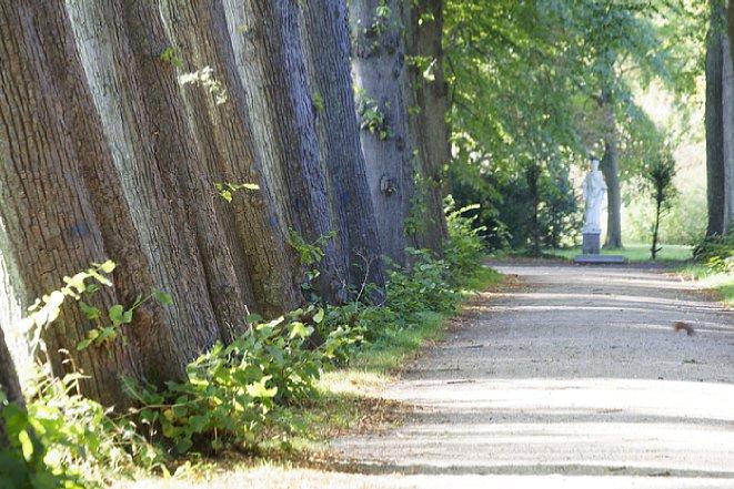 Bild Bis bei den Bäumen am Ende kaum noch eingeschätzt werden kann, wie weit der Abstand zwischen den Bäumen tatsächlich ist. Brennweite 300 mm (KB-Sensor). [Foto: Medianord]