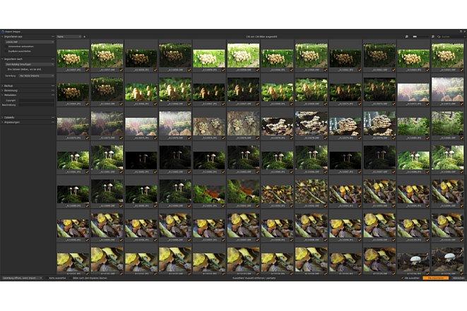 Bild Im Import-Dialog kann man entscheiden, welche Bilder importiert werden und ob diese nur in einen Katalog aufgenommen werden sollen beziehungsweise auch in dieOrdnerstruktur vonCapture One 21. [Foto: MediaNord]